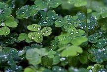 Shades of green / Оттенки зелёного