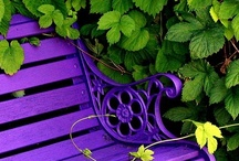 Purple+Green