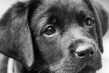 Esther Dagn - Hunde