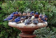 THIS PLACE IS FOR THE BIRDS  / Charming Birds ~ Bird Houses ~ Bird Feeders ~ Bird Baths ~ Bird Nests ~ Nature's Garden Visitors & A Few Creative Ideas / by Dorothygail Saverien Marovich