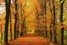 Autumn / Autunno