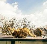 Cats / Gatti