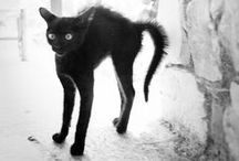 Anim-al-ist- / Creatures with 1,2,4,6,8 legs. Depictions. Humanimals.