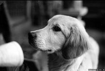Dogs / Cani