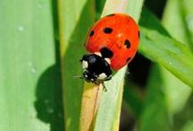 Insects / Insetti