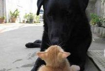 Dog & Cat / Cane & Gatto