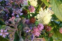 """Petits bouquets d'accueil / Aux chambres et table d'hôtes """"Les Tilleuls"""" à Darbonnay dans le Jura, nous accueillons avec de petits bouquets fait maison"""