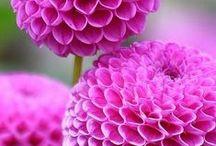 Ψ Flower Ψ