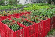 Garten/Pflanzen / Gardening