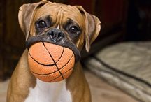 Dog Cuteness! / by Abby H