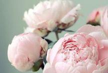 Blommor / Flora / Flower / .