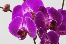 """Radiant Orchid Home / The new 2014 Pantone Color of the Year is """"Radiant Orchid"""" and we are ecstatic to start seeing this in homes!"""