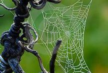 Wondrous Webs / by Kathy Iveson