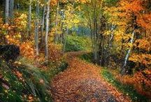 Paths & Walkways / by Kathy Iveson