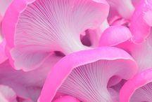 Mushrooms texture
