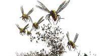 Monster - Swarm
