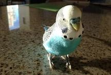 Mr. Bird is the Word / The life and times of Mr. Thoth T. Bird, parakeet extraordinaire.