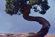 """Árvores / """"A natureza não faz nada em vão.""""  Aristóteles"""