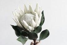 Bloom / Delicate beauties