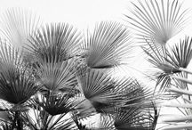 BOLD_PLANT_Inspire
