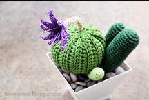 Cactus, crasas y otras plantas