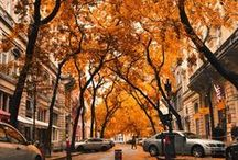 Autumn / We love the colours of Autumn and the crisp mornings - here we will pin anything associated with this season!