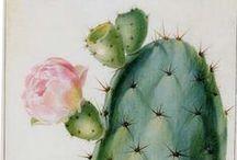 Dibujos de cactus