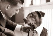 Dogs at Weddings / by RealSizeBride RSB