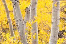Yellow - sunshine, buttercups, happiness