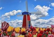 The Netherlands / Our Gouda and Edam cheeses come from Holland, a country with a rich and lengthy cheesemaking tradition. Enjoy the sights of this beautiful country here. We're particularly fond of the windmills. So pretty!