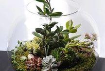 Mini botanica
