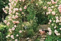 Garden / by Mackenzie Butler