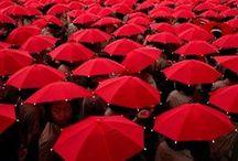 Seein' Red / by Mackenzie Butler