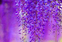 Lavender Days / by Mackenzie Butler