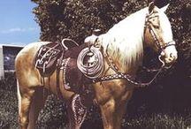 The beauty of Horses: Famous horses / by Brenda Stiffler