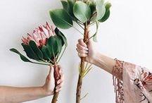 Floral Beauty / Schönheiten aus der Natur in besonderer Art und Weise...!