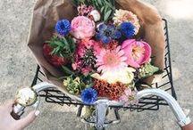 Hello Spring / Wir können es kaum erwarten: Frisches Grün, Sonnenschein und blühende Blumen! Ob Narzissen, Tulpen, Hyazinthen oder Flieder - hauptsache uns zaubern die Frühblüher ein Lächeln ins Gesicht!