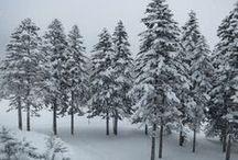 Winter wonderland ウインターワンダーランド