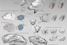 Reference Anatomy Animal / Reference Anatomy Animal