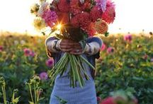 Colourful Summer / Der Sommer wird Bunt!  Hier zeigen wir Dir unsere schönsten Sommersträuße aus Rosen, Sonnenblumen, Pfingstrosen, Allium, Rittersporn, Levkojen, Schleierkraut und Gerberas, die ganz bestimmt gute Laune bringen.