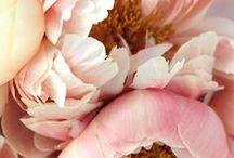 Blush Tones / Pastell in all seinen Nuancen, gepaart mit wunderschönen Blüten von Rosen, Pfingstrosen, Hortensien, Fresien, Ranunkeln, Gerbera und Schneeball. Ein Traum in jeder Jahreszeit!