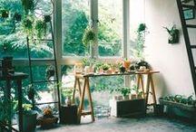 Interior Design / bohemian and retro inspired. plants are important!