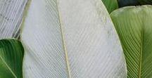 Greenery / Greenery: der Trend dieses Jahres - Blattgrün! Natürlich & frisch - das Erwachen der Natur! Sammel jetzt tolle Inspiration zu dieser Trendfarbe >>
