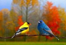 Animales De Colores / Colores de la Naturaleza