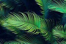 Inspiration tropical