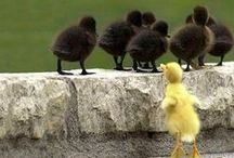 Animals Bird Duck / Eend / by Frieda Hoppen