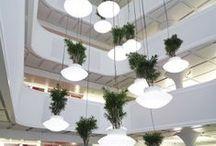 curiose lamps