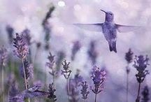 Lavender Love / And be sure to smell the flowers along the way♥