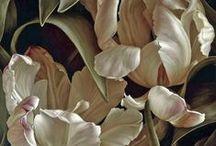 art - květiny, rostliny