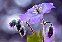 květiny, rostliny, přírodní motivy - foto